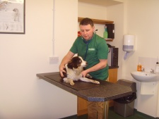 Kilkeel Vet Clinic - Treatment